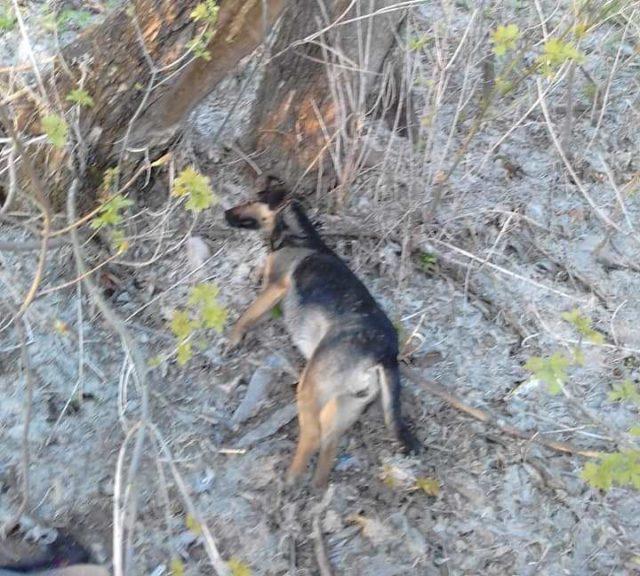 Возле школы на Харьковщине нашли несколько трупов животных (фото)