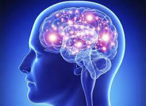 Главная тайна человеческого мозга раскрыта