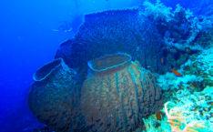 Ученые нашли и показали самое древнее существо на Земле