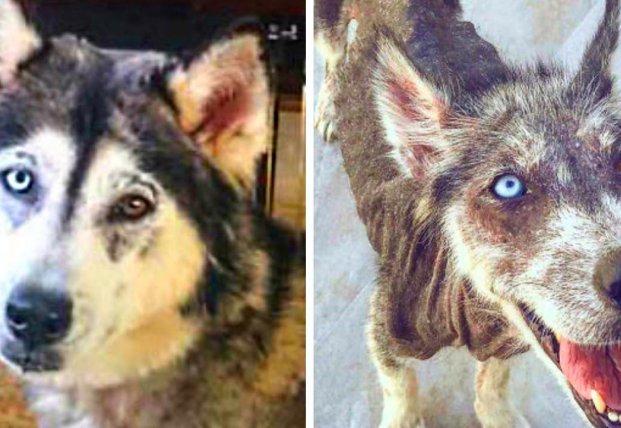 До и после: когда забрали собаку из приюта (видео)