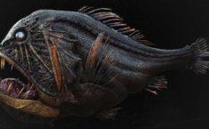 Цунами показало неизвестного хищника из морских глубин: его вид доводит до дрожи