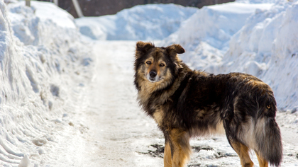 Собака вмерзла в лед на реке в Биробиджане