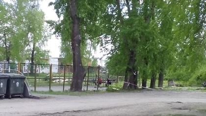 Сверлит мозг: кемеровчанка пожаловалась на вырубку деревьев