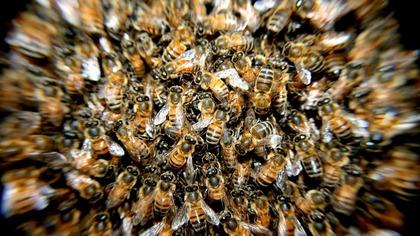 Российско-эстонскую границу атаковали пчелы