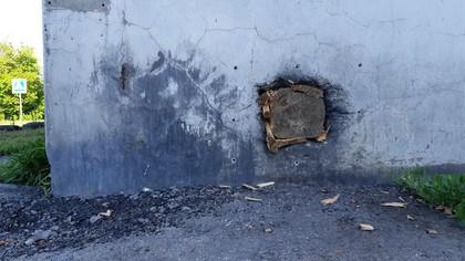 Ненавистники животных замуровали живых котят в фундаменте дома в Кузбассе