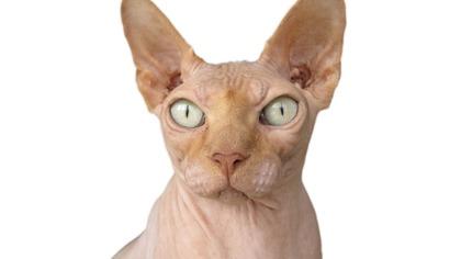 За сбежавшего кота Бари Алибасова объявили неожиданную награду