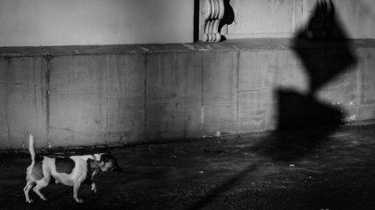 Кемеровчанку возмутила жестокость мальчика-