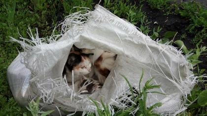 Прокопчане выбросили полный мешок с кошками и котятами