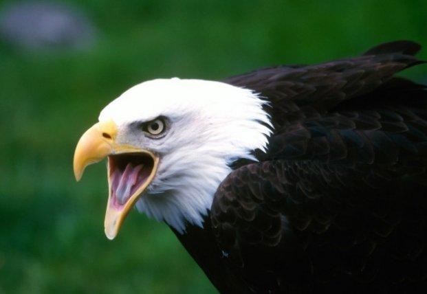 Орел украл камеру и снял свой полет (видео)