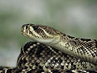 В Негеве змея укусила 40-летнего мужчину