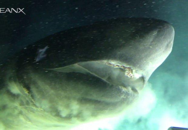 Ученые сняли на камеру гигантское морское чудовище (видео)