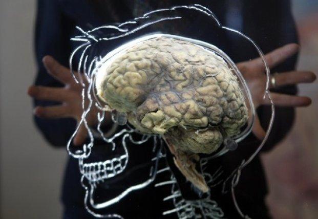Найден способ омоложения старого мозга