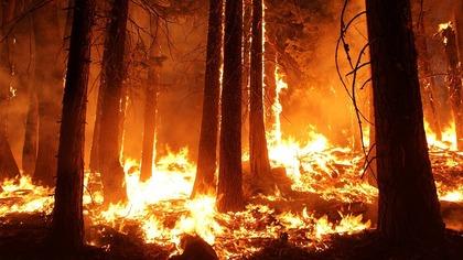 Дым от сибирских пожаров достиг Северной Америки