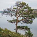 Легендарное дерево из сериала