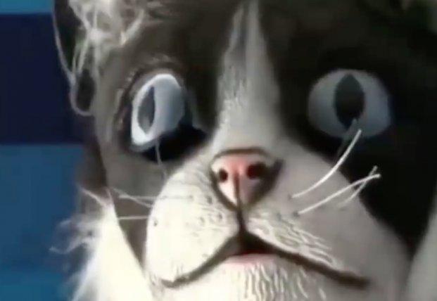 Реакция котов на человека в маске кошки (видео)
