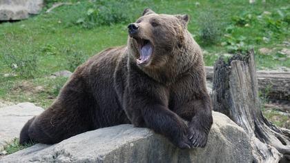 Крикливая жительница Якутии испугала медведя