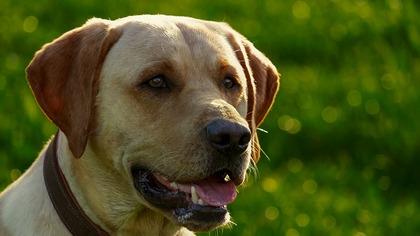 Ученые проследили изменения мозга у разных пород собак