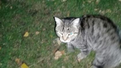 Кемеровчанка разыскивает хозяев упитанного кота