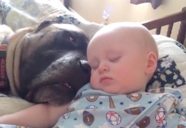 Маленький ребенок копирует собаку: они ведь друзья (видео)