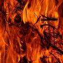 Более 40 животных сгорели на ферме в Томской области