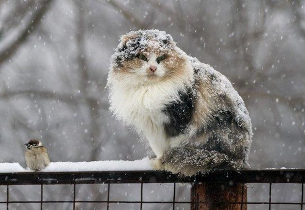 Прогноз погоды на 14 декабря: придет потепление и неприятный