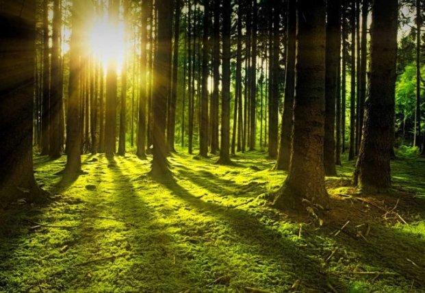 Ученые нашли самый древний лес в мире
