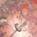 Кемеровчанка возмутилась кучей мертвых мышей в подъезде