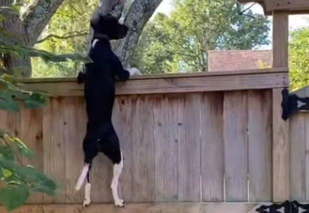 Сеть насмешила собака, которая пытается добраться к белке (видео)
