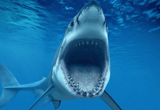 В Австралии обнаружили огромную акулу, плавающую в реке (видео)