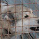 Стая бродячих псов снова напугала кемеровчан