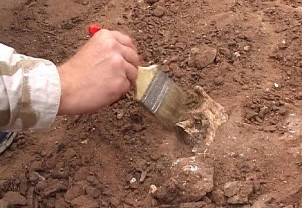 Археологи обнаружили челюсть предка собаки