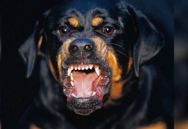 В Харьковской области пес загрыз 4-летнего ребенка (фото)
