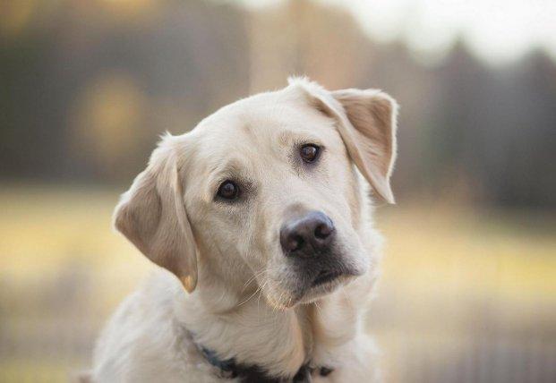 Продам собаку: украинцы устроили флешмоб (фото)