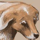 Кемеровчанин оставил на дороге сбитую собаку