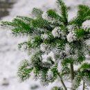 Кузбасские синоптики спрогнозировали сильный перепад температуры