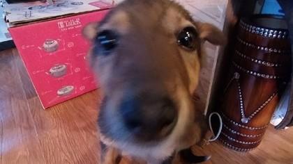 Новокузнечанин отдаст в добрые руки найденного на улице щенка