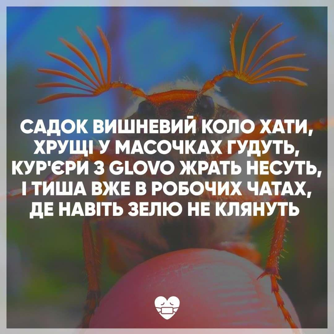 В Сети показали, как изменились бы известные стихи классиков украинской литературы в период коронавируса и карантина (фото)
