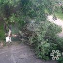 Порыв ветра повалил дерево в кемеровском дворе