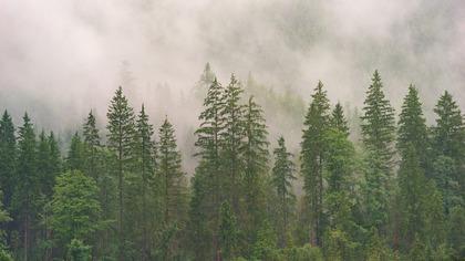 Черный лесоруб опрокинул грузовик с деревьями в попытке сбежать от лесничего в ЕАО