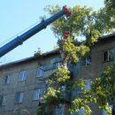 Крупное дерево упало на пятиэтажный дом в Новокузнецке