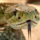 Ядовитая змея укусила собаку в новокузнецком парке