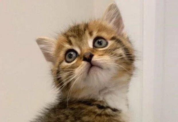 Котенок, испугавшийся своего отражения в зеркале, насмешил сеть (видео)