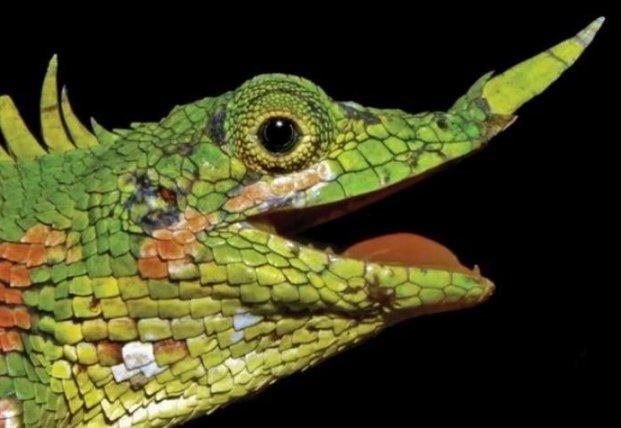 Ученые обнаружили животных, которые считались вымершими (фото)