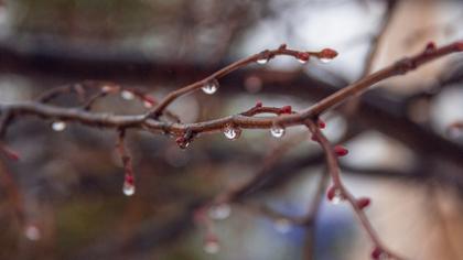 Синоптики спрогнозировали прохладные и дождливые выходные в Кузбассе