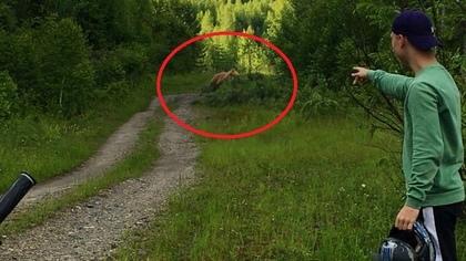 Кузбассовцы повстречали в лесу голодного медведя