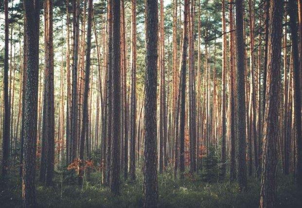 Ученые определили последствия средневековой чумы с помощью деревьев