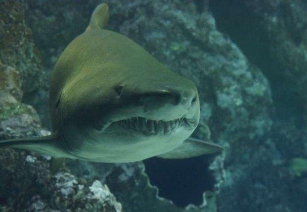 Ученые обнаружили мутировавших акул в кратерах вулканов
