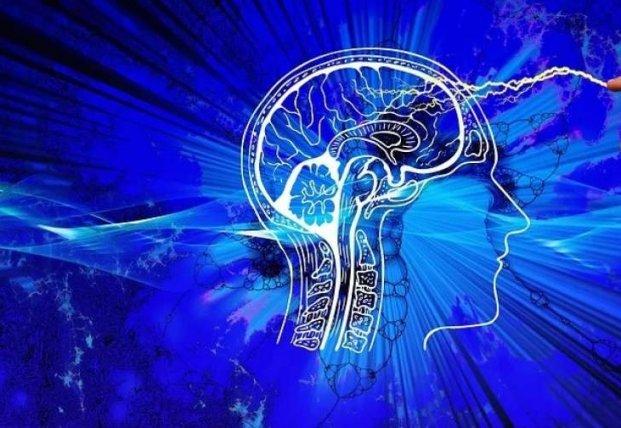 Ученые выяснили, что алкоголь уменьшает мозг