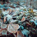 Синоптики спрогнозировали заморозки на воскресенье