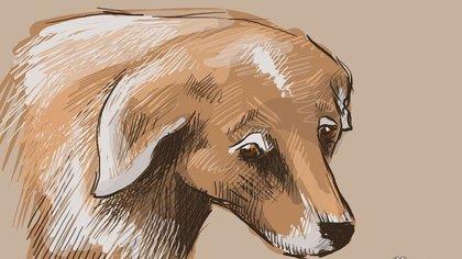 Отдыхавшие на Алтае кузбассовцы потеряли собаку